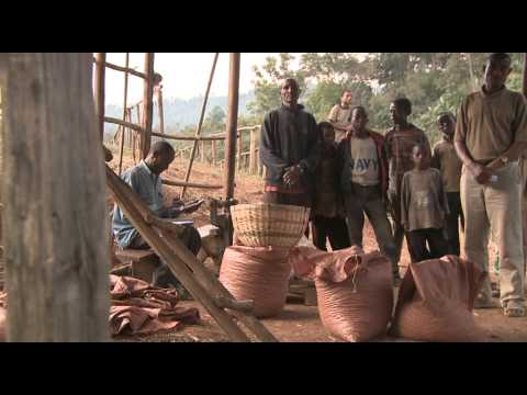 Ethiopia - Coffee - Trabocca - Ethiopia - Coffee - Trabocca