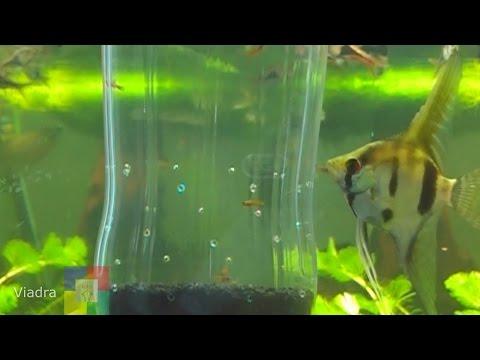 Отсадник в аквариум своими руками 94