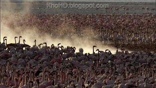 Animal Documentary 2015  Africa: Wild Kalahari   National Geographic