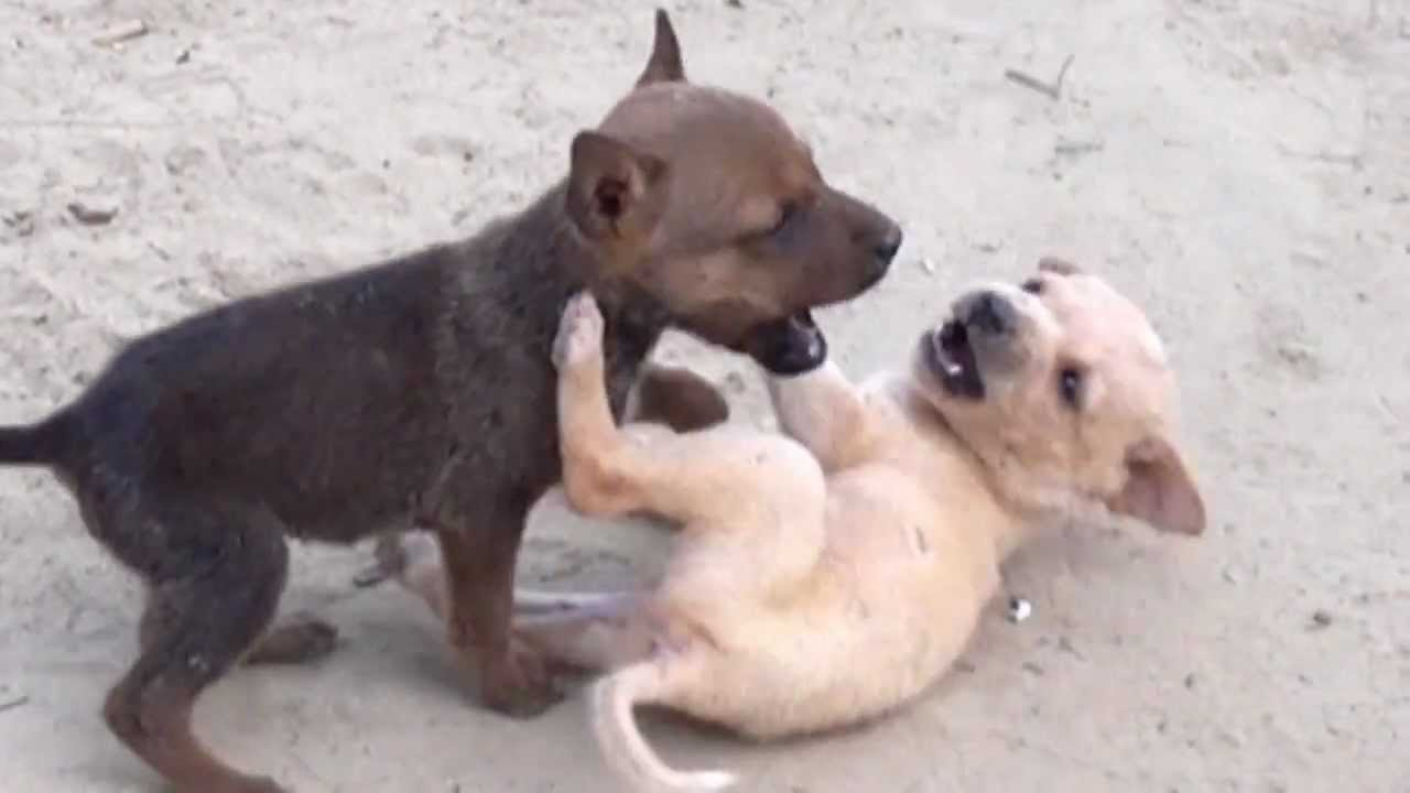 I Need Dog Videos