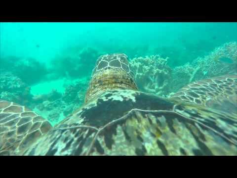 Así ve una tortuga la Gran Barrera de Coral