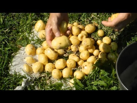 Как почистить ведро молодой картошки за 30 секунд