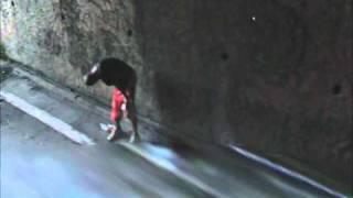 Vídeo 31 de Cascadura