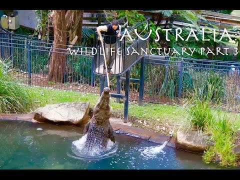 AUSTRALIA:  Currumbin Wildlife Sanctuary PART 3