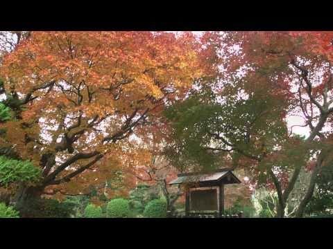 瑞穂市 「小簾紅園」 ~紅葉~