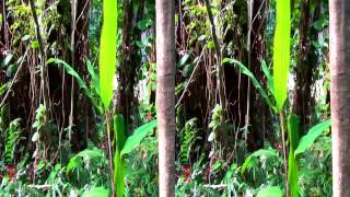 3D Video Exotic Tropical Plants Hawaii Nature Scene - 3D Video Everyday N°263