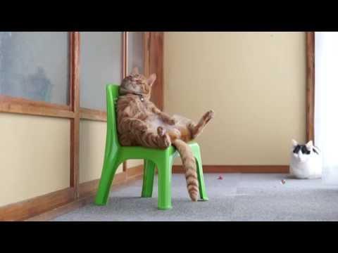 緑の椅子に座ってまるで人...
