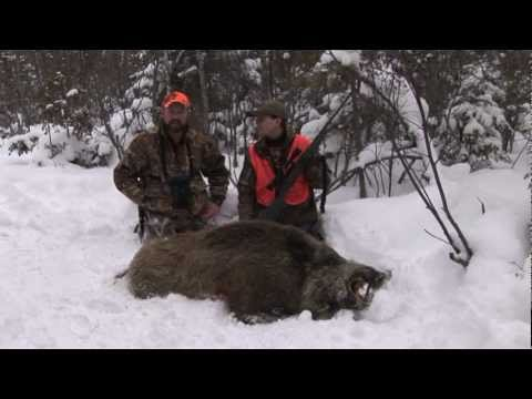 Episode 1 Russian Boar Hunt video