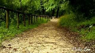 Suoni della natura, Bosco video in HD (Nature Sound Wood, Relax)
