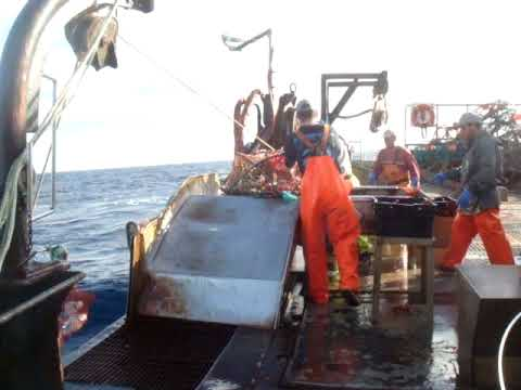 crab fishing on the fv benthic mariner
