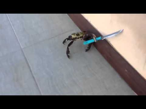 Real life Crab People holding knife - south park spoof