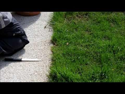 Rasenkanten - NewWonder555