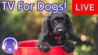 ✅ TV for Dogs! Entertainment for Dogs and Puppies with Calming Music!