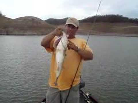 Lake Baccarac Bass 44