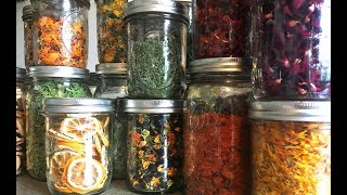 Why I Dehydrate for Food Preservation