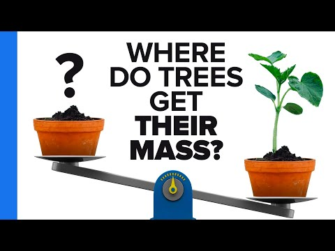 Where Do Trees Get Their Mass From?