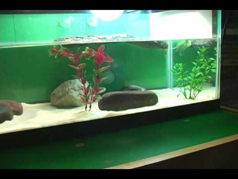 My turtle tank
