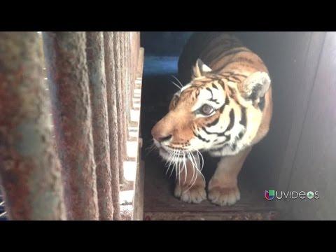 Casos de maltrato y crueldad contra animales en los circos