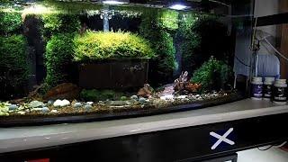 Want More Biofilm In Your Shrimp Aquarium ? ⭐⭐⭐⭐⭐