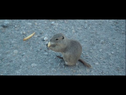 feeding-gophers-fries.html
