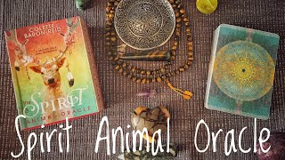 Unboxing & Walkthrough of Spirit Animal Oracle by Colette Baron-Reid & Jena DellaGrottaglia