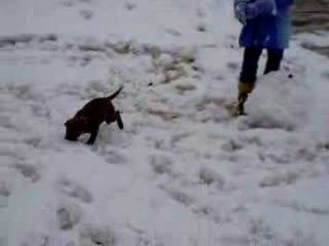 Frisky Puppy in Texas Snow Video