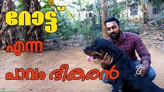 Rottweiler dog  l Dog farming kerala l The strong watch dog