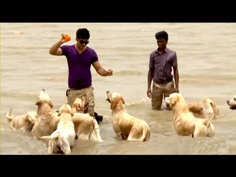 Paras plays around with not 1, not 2, but 30 dogs in Guwahati