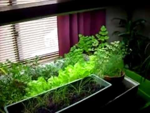 Indoor Aquaponics Garden - Free Food!