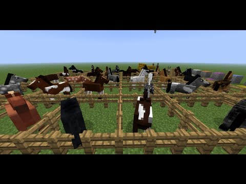 MineCraft 1.6 Horse Breeds and Donkeys! All Tiers in MineCraft!