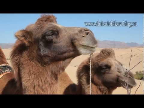 Путешествие в дикую Монголию, ч2.mpg