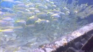 Underwater Fish - ,free video download