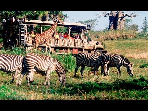 Kilimanjaro Safari Disney's Animal Kingdom Disney World Hd Gorgeous! (pandavision) video