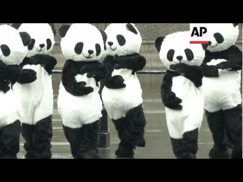 Pandas love tai chi!  Panda Awareness Week in 2012