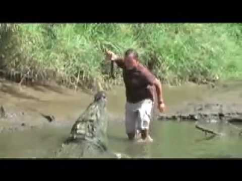 Giant Croc Swallows Man Arm? (by Earl Cole) follow @earlcole