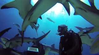 GoPro: Nassau Bahamas Shark Dive with Stuart Cove's 720p