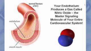 Endothelial Health Webinar