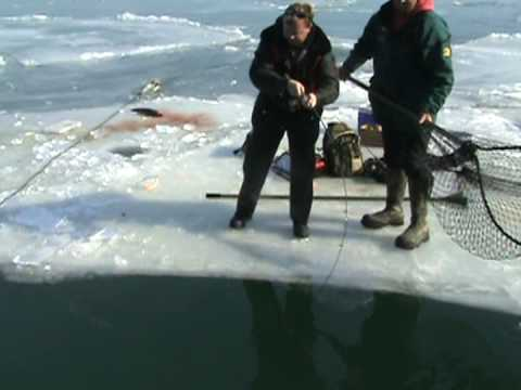 Crazy Brown Trout fishing Milwaukee harbor Best Trout fishing in the WORLD!