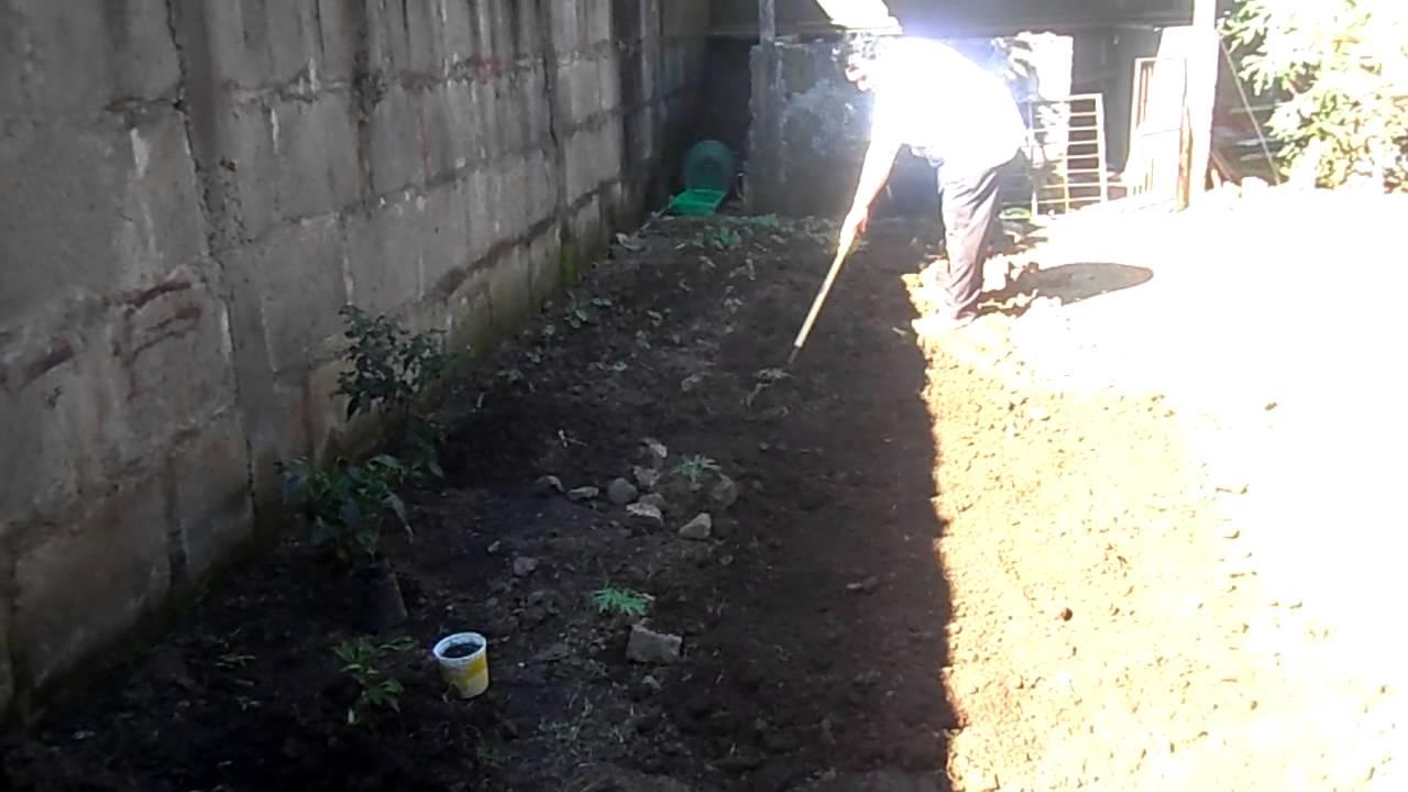Preparando la tierra para sembrar en el huerto de patio - Preparacion de la tierra para sembrar ...