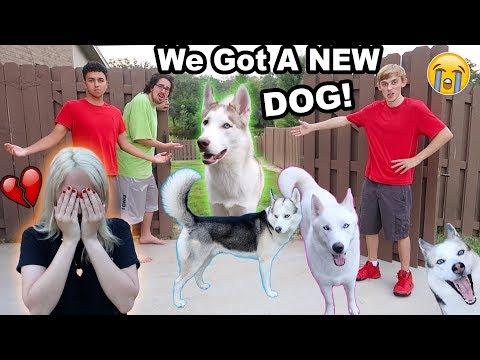 MY DOGS RAN AWAY!! (I CRIED) (PRANK)