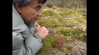 Plantas Carnivoras en Chiloé