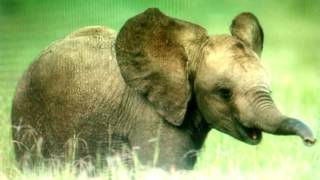 Watch Samples African Ivory video