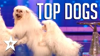 10 Amazing Acrobatic & Dancing Dog Auditions On Got Talent | Got Talent Global