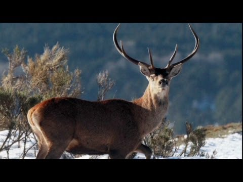 What is deer antler spray?