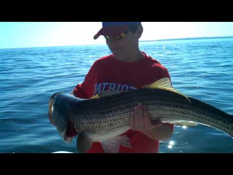 Cape Cod Fishing Reports | June 10 25 pound bass