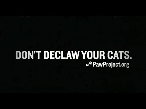 Declawing Cats Humane Please Don 39 t Declaw Your Cats Quot