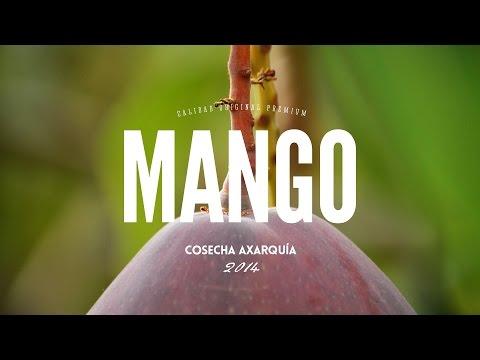 Vídeo Cosecha de Mango TROPS 2014