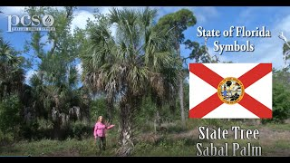 Learning about the Tree of Life: the Sabal Palm on Life Science at a Social Distance.