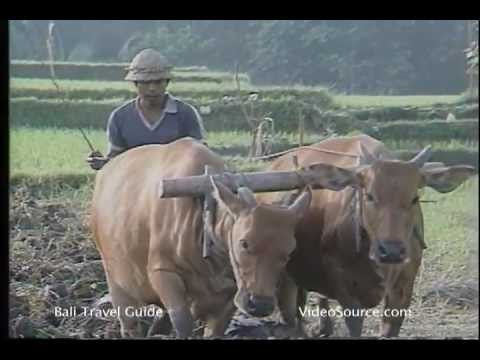 Balinese Permaculture
