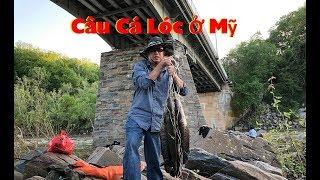 Câu Cá Lóc Ở Mỹ